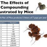 compounding mice